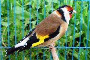 کشف ۳۰۰ قطعه پرنده زینتی در دهگلان
