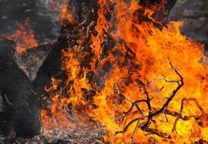 حریق در ۳۰ هکتار از جنگلهای استان گیلان