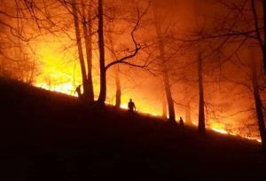 آتش سوزی در ۳۵ هکتار از اراضی جنگلی استان گیلان