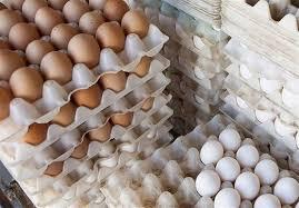 بازار پر نوسان قیمت تخم مرغ در زاهدان