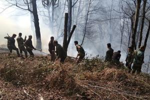وقوع ۲۱ مورد آتش سوزی در عرصه های جنگلی مازندران