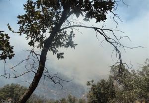 جنگلهای حیران در آتش/ تردد در محور مواصلاتی اردبیل-آستارا ممنوع شد