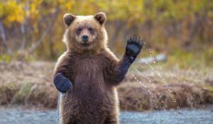 رژیم غذایی خرس قهوه ای
