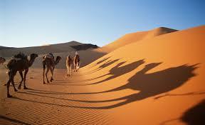 سفر به معروفترین پارک حیات وحش قاره آفریقا!