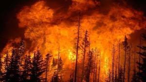 شعله ور شدن دوباره آتش در جنگلهای رامسر