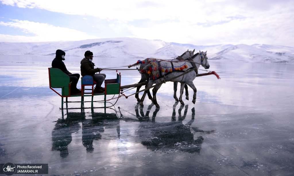 سورتمه سواری با اسب روی یخ