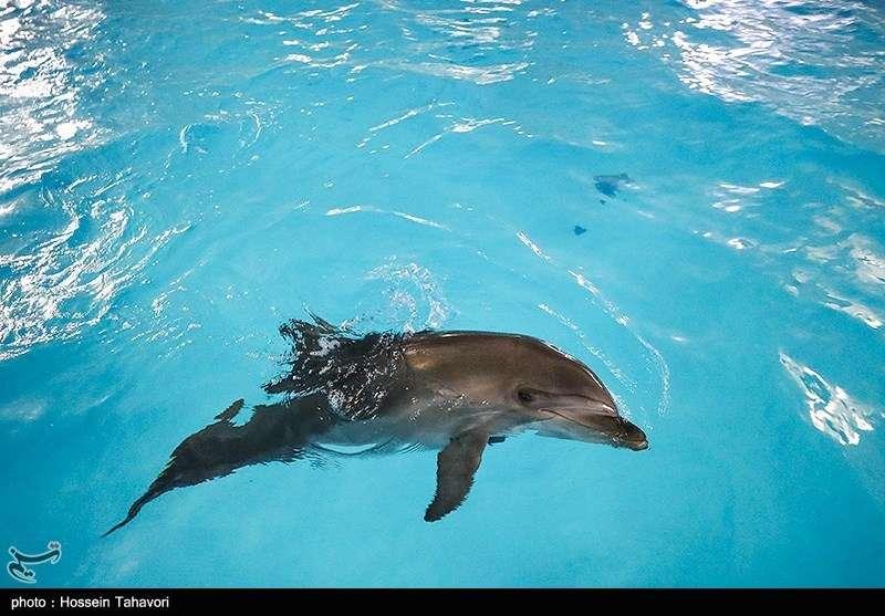 عکس/ انتقال تنها دلفین برج میلاد به کیش