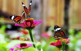 باغ پروانه در نزدیکی شهر پاتایای تایلند