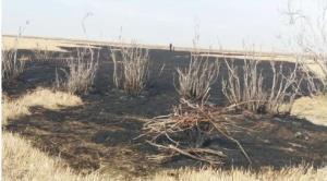 تالاب قره قشلاق بناب دچار آتش سوزی شد