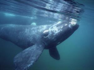 صید و تغذیه حیرت انگیز نهنگ