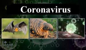 ویروس کرونا توسط انسان ساخته نشده است