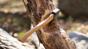 ماجرای قطع درختان مجتمع عقیق کرج چه بود؟