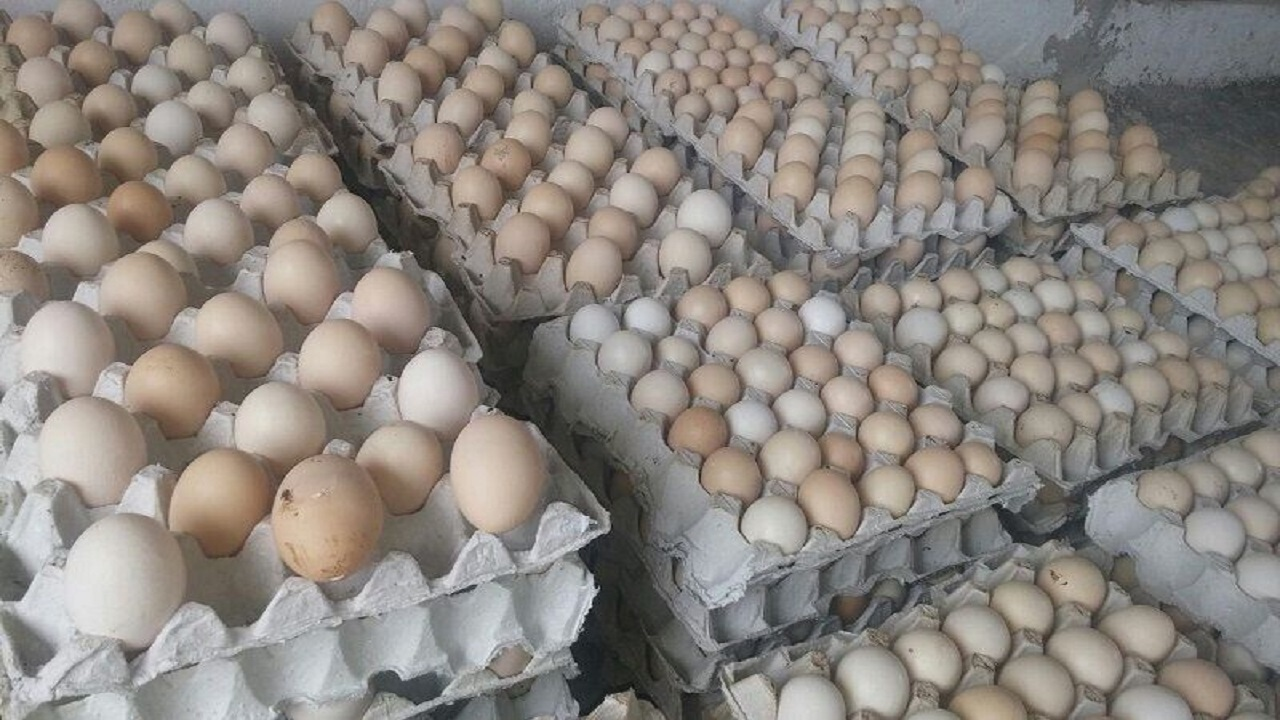 ۸ تن تخم مرغ احتکاری در زاهدان کشف شد