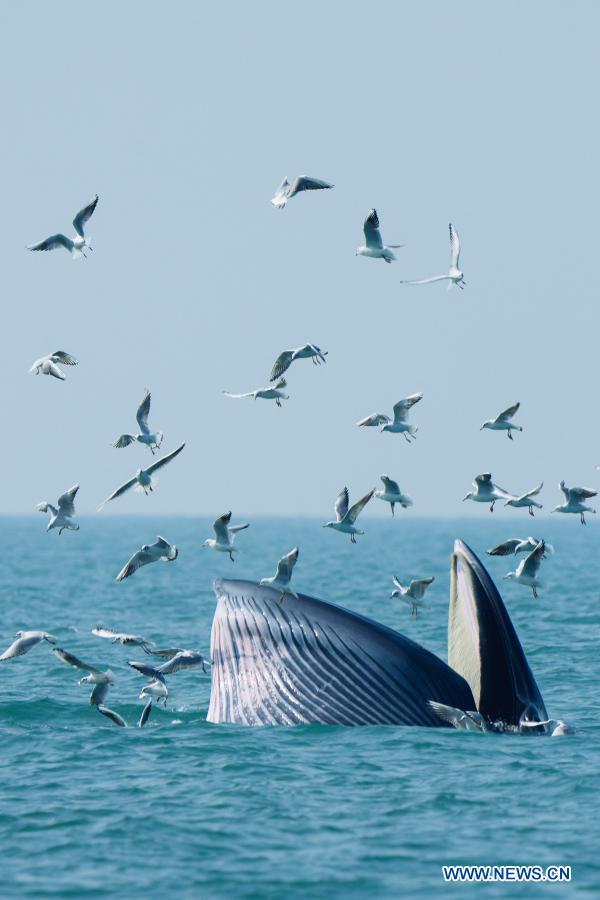 صید پرنده توسط نهنگ!