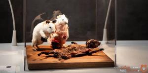موزهای از مشمئزکنندهترین غذاهای دنیا