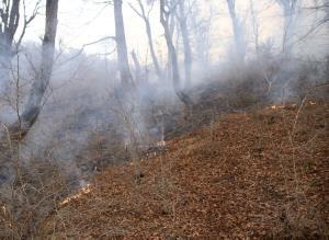 اعلام آمادگی اردبیل برای کمک به مهار آتشسوزی در جمهوری آذربایجان