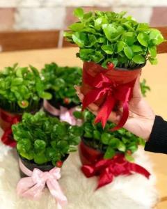 بهترین زمان برای کاشت سبزه عید با هسته مرکبات