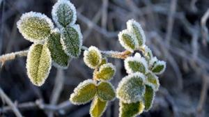 ننه سرما میهمان فارس می شود؛ کشاورزان آماده باشند