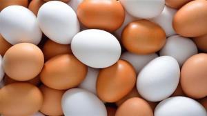 ممنوعیت خروج تخممرغ از استان یزد