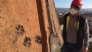 ویدئویی جالب از رّد پای حیوانات بر بام کلیسای جامع فلورانس