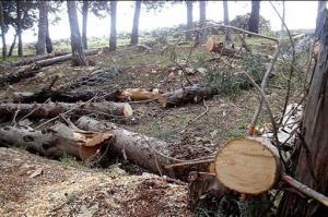 کشف محموله ۲ تنی چوب قاچاق در گناباد