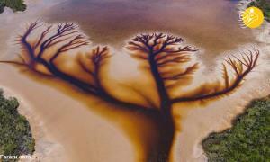 عکس هوایی که شمایل یک درخت زیبا را به خود گرفت!