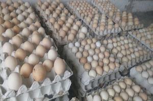 عرضه تخممرغ با قیمت شانهای ٣۵ هزار تومان در زاهدان آغاز شد