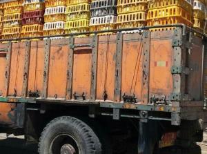 کامیونهای حامل ۸.۸ تن مرغ زنده در مراغه توقیف شد