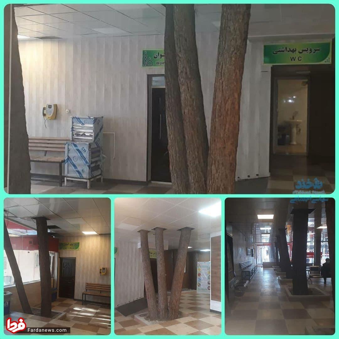 احترام به طبیعت هنگام ساخت بیمارستانی در سنندج