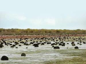 ۲۵ درصد خلیج گرگان و تالاب میانکاله خشک شد