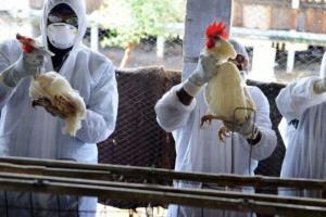 موردی از آنفلوآنزای فوق حاد پرندگان در بروجرد مشاهده نشده است