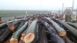 چوبهای خارجی قاچاق به مقصد نرسید