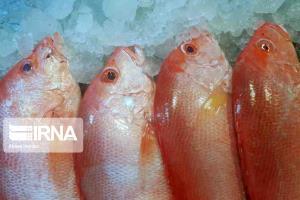 عکس/ بازار ماهی فروشان بوشهر