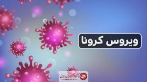اینفوگرافی شمار مبتلایان کرونا در استان بوشهر