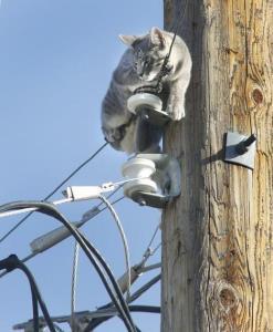 نجات گربه روی کابل برق در سوسنگرد