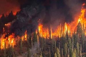 عامل مهم آتشسوزی زمستانه جنگلهای شمال کشور