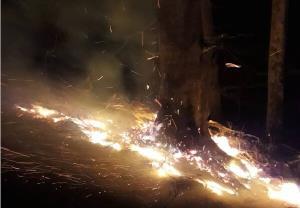 وقوع ۲۱ فقره آتش سوزی در جنگل های استان گیلان