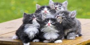 استفاده ابزاری از گربه ها