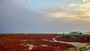 ۲۵ درصد خلیج گرگان خشک شد