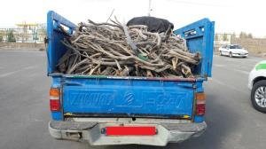 دستگیری عاملان قطع درختچههای تاغ در گناباد