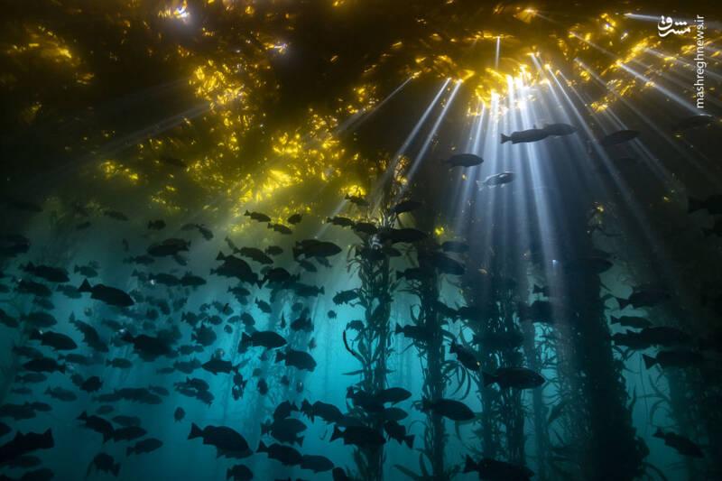 تصاویری دیدنی از اعماق اقیانوس
