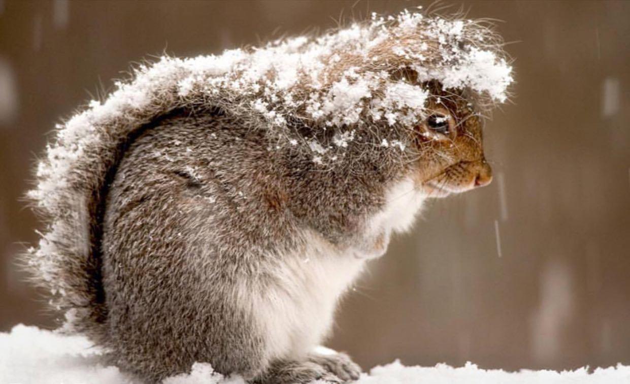 سنجابی که با دمش خودش را گرم میکند
