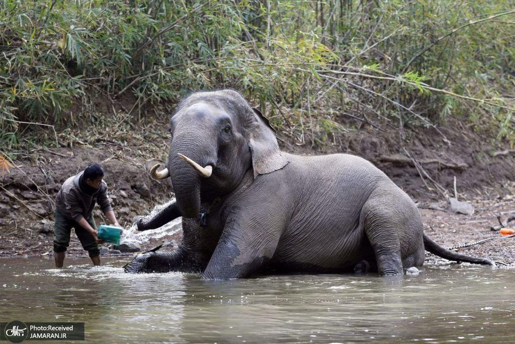 آب تنی فیل ها