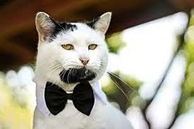 گربه با ریش پروفسوری دیده بودین؟!