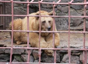 رفتار عجیب و تکان دهنده خرس آزاد شده از قفس