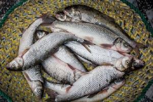 متخلفان صید غیرمجاز ماهی در سیروان دستگیر شدند