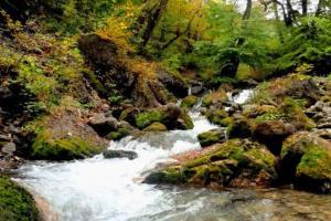 دیدنی های تنکابن؛ از دشت دریاسر تا پارک ملی خشکه داران