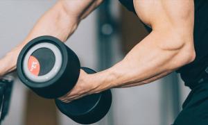 پیشرفت عضلات و عضله سازی