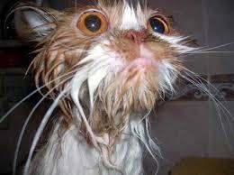 شیرجه خندهدار گربه درون وان حمام