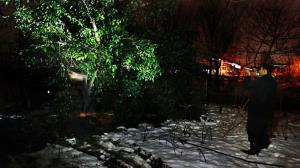 کشتار شبانه گنجشکها در مازندران